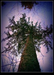 An Old Tree by surrealistic-gloom