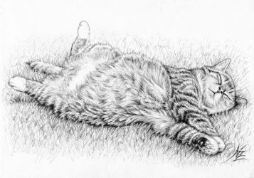 Relaxing Cat by ArtsandDogs