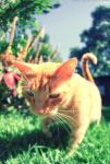 Close-up of a cat with a wide-angled lens... by Darth-Marlan