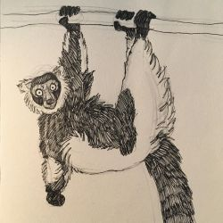 Inktober day 8 - Black and white ruffed lemur by DRGNFL