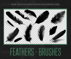 Feather Brushes | Photoshop by sweetpoisonresources