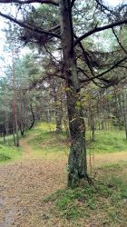 Curonian Spit :October: 6 by J-dono