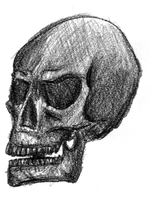 Skull Drawing by christofferwig