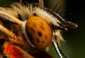Butterfly Close Up 1 by Alliec