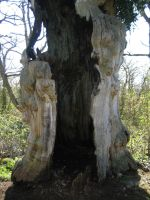 Hollow tree by CAStock