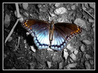 Beautiful Butterfly 2 by SparkOut1911