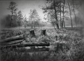 Swamp by Andrei-Pervukhin