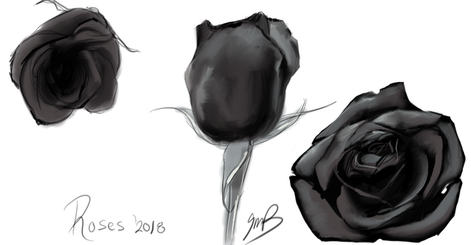 Roses [black and white study] by Mondracon