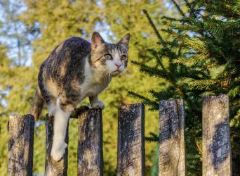 Cat on the fence by Rdzeniuch