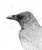 Crow - Ink by Bluecrow10