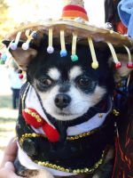 Mouser The Magnificent Mariachi Chihuahua by KeyboardingChihuahua