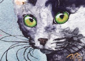 ACEO Black Cat Sparkle by OdderByArt