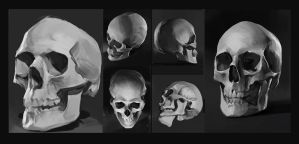 Skulls studies by SunnyJu