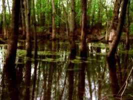 Swamps by SEnigmaticX