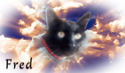 Memorial For My Dear Pet Fred by SandyCris91