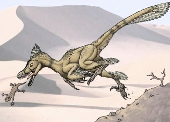 Acceloraptor by EWilloughby