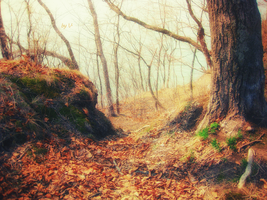 Magic forest :) by InvisibleHorizon