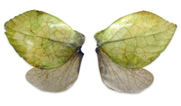 insect wings by Meltys-stock
