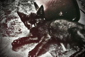 exhausted kitten by Eithx