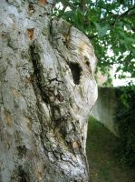 tree ghost by bluemacgirl
