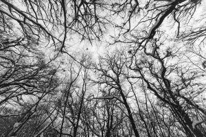 Branches by hrvojemihajlic