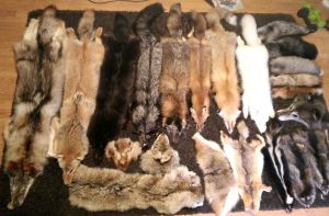 Pelt Collection of 2014 by TheDarkWolf117