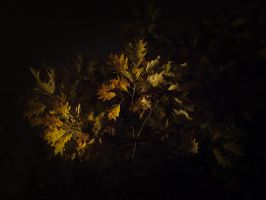 Leaves at night 5 by Inilein