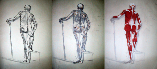 Bone and Muscle Study by CaraKhan