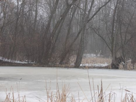 Winter Swamp Background 2 by FantasyStock