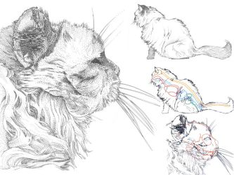 Scientific Illustration: Cat by muffin-wrangler