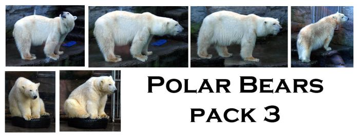 polar bears pack3 by syccas-stock