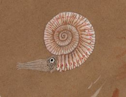 Ammonite paint experiment by Animalistic-Artworks