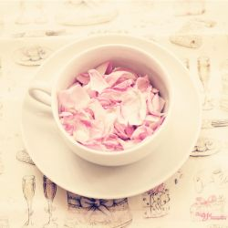 Cup of Roses by mayat-s