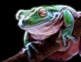 Electric Frog by biawak