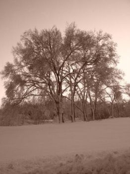 Snow Covered Tree - Sepia by RainbowPickle