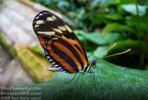 Another beautiful looking exotic butterfly by TheFunnySpider