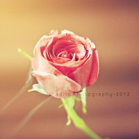 .......rose by addy-ack