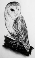 Barn Owl in Pencil by GabrielleC-Drawings