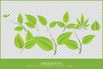 green leaves png by JaeJade