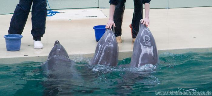 dolphins waiting for fish ^^ by DelphiDelphin
