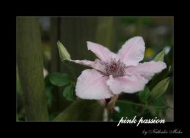 pink passion by dieZera