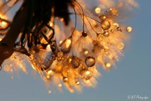 natural spectacles 22 by MT-Photografien