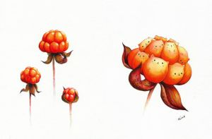 cloudberry by Alliot-art