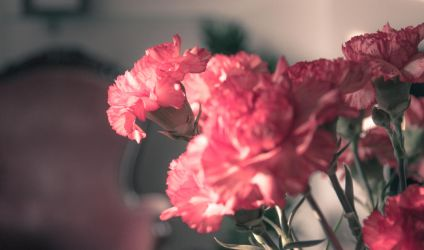 flowers in the evening sun 2 by stupidduck