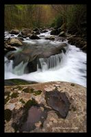 Tremont Spring 09 by TRBPhotographyLLC