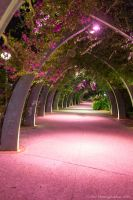 Colours by Night by ARC-Photographic