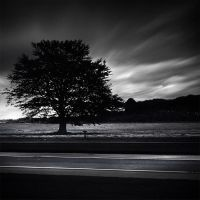 my tree at dusk by Ssquared-Photography