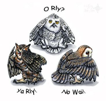 Three Wise Net Owls by Nashoba-Hostina