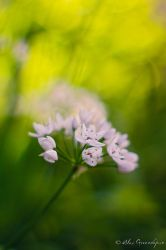 The Soft Touch of Spring by alexgphoto