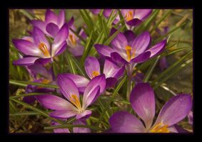 Glad Easter by Hartmut-Lerch